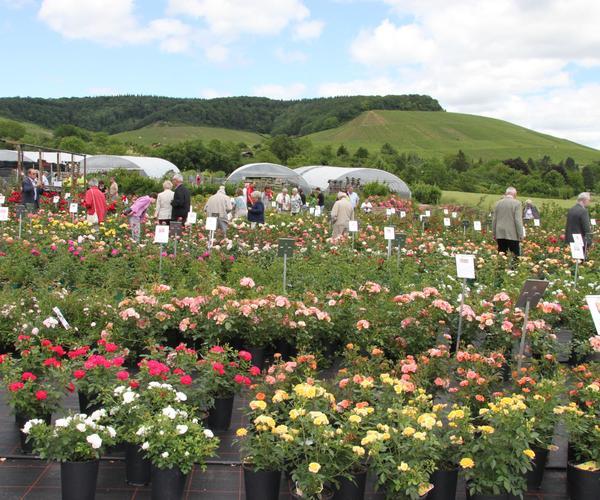 Rosenparadies